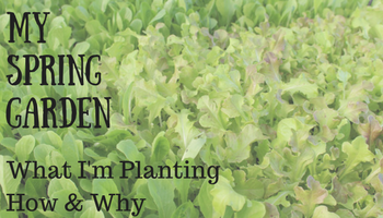 My Spring Garden - What I'm Planting How & Why _ Making My Home Happy